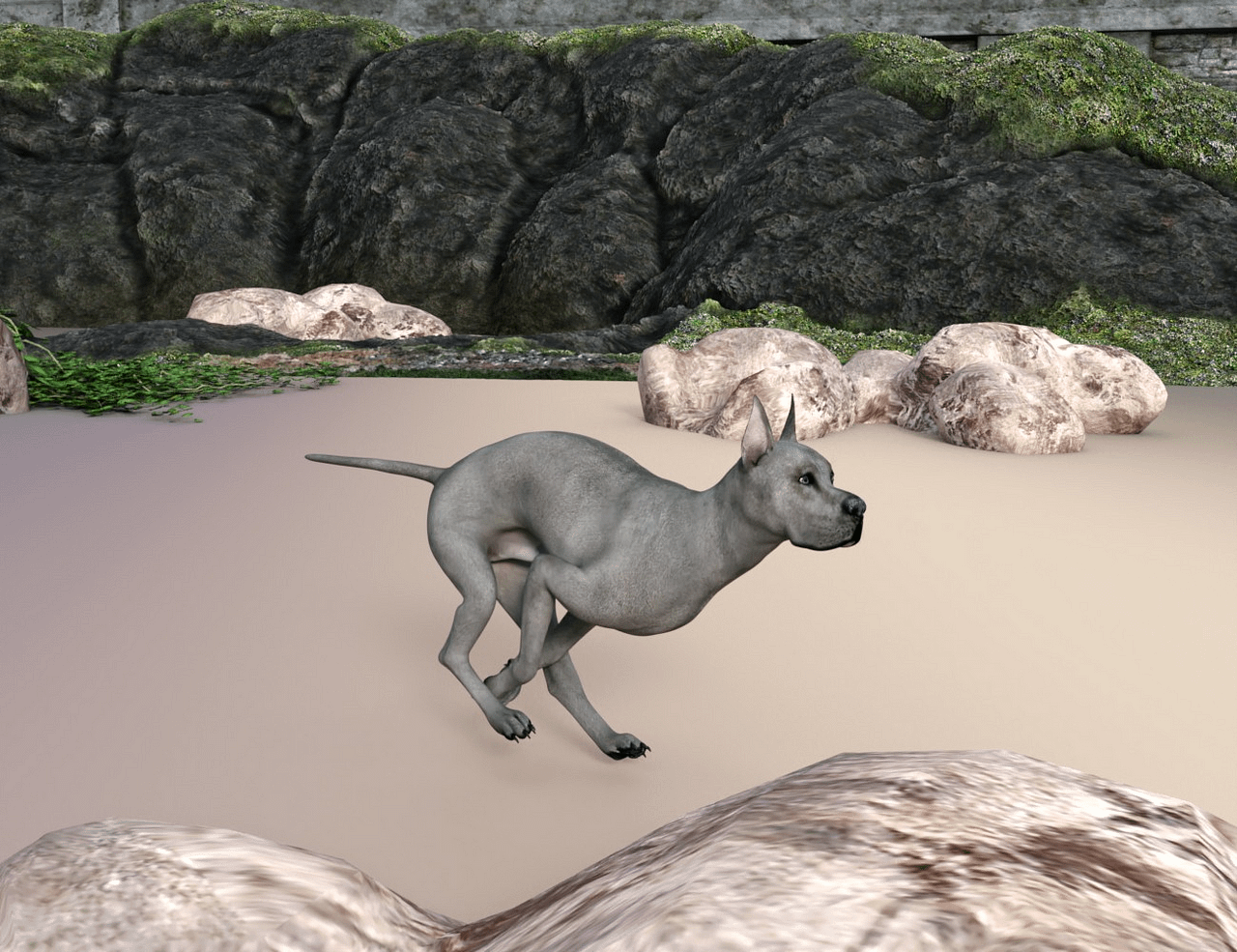 daz studio animation of a running dog
