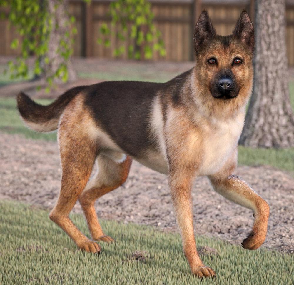 german shepherd dog 3d model