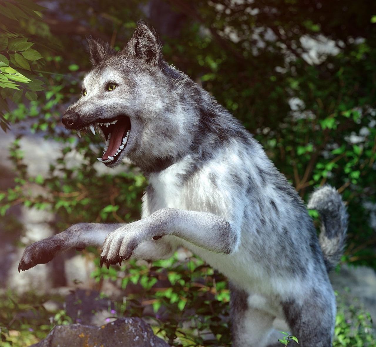 grey wolf 3d model for daz dog 8