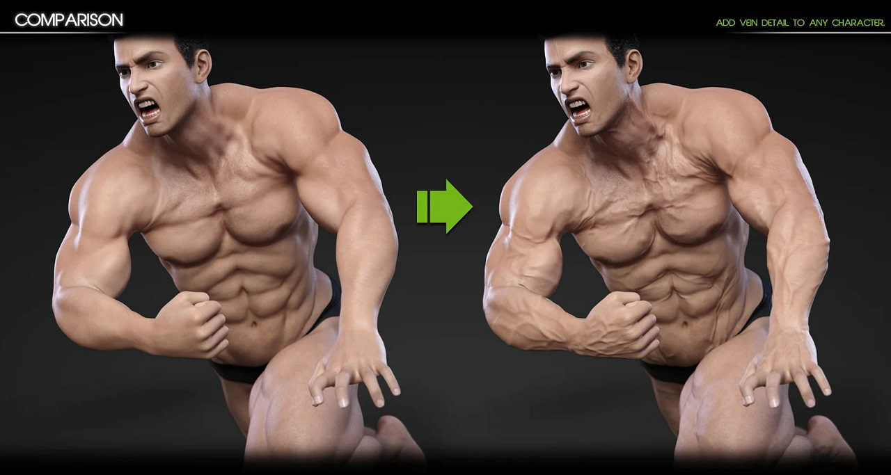 vascularity daz3d for male and female