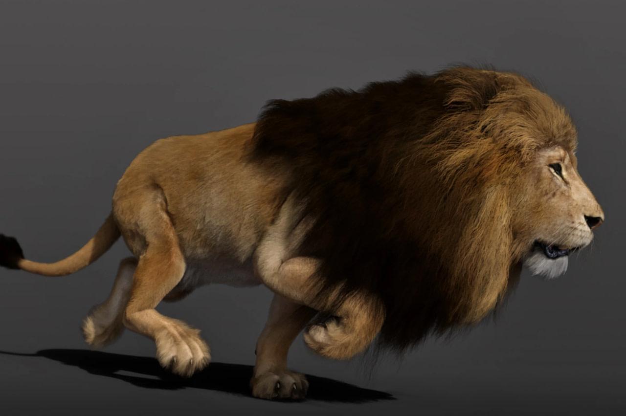 felidae lion dforce hair