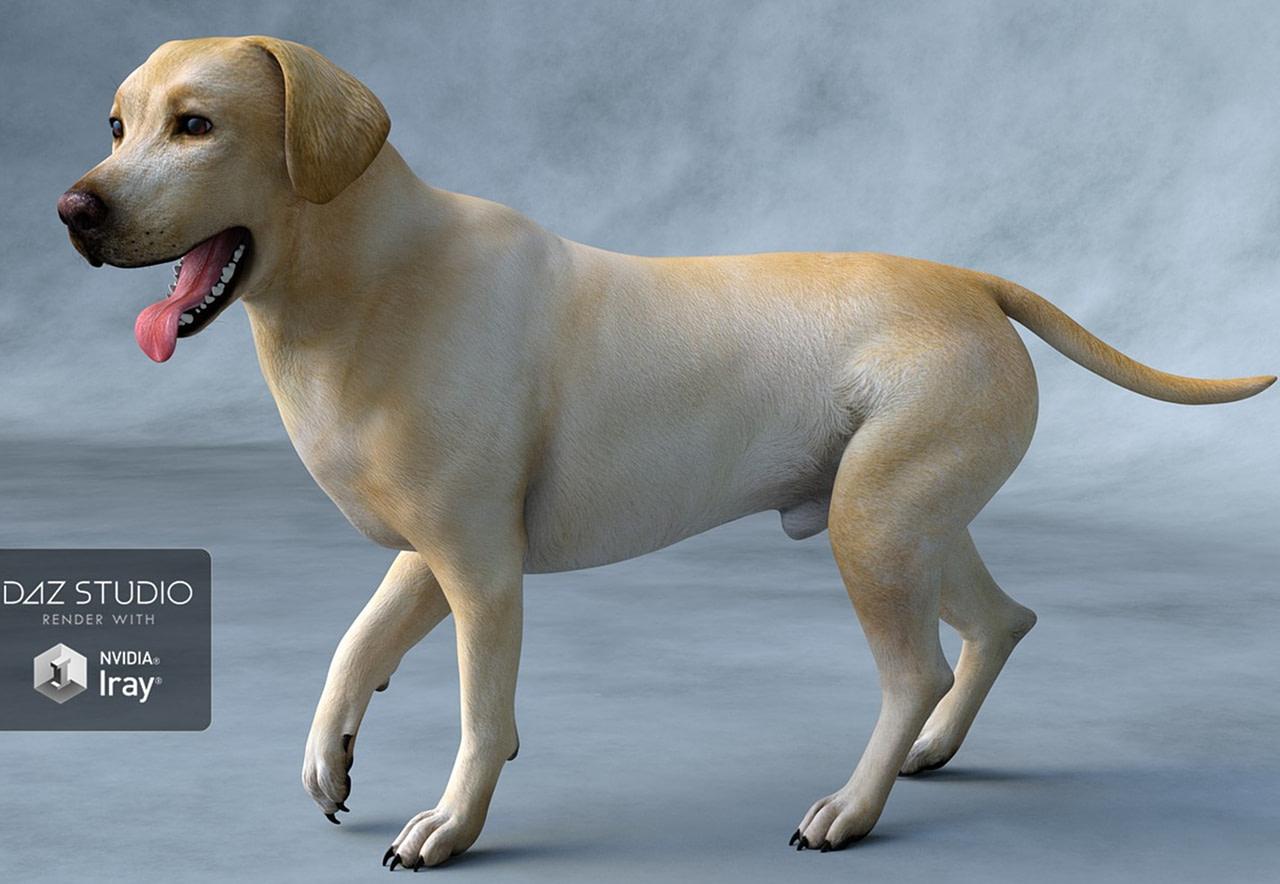 labrador dog 3d model