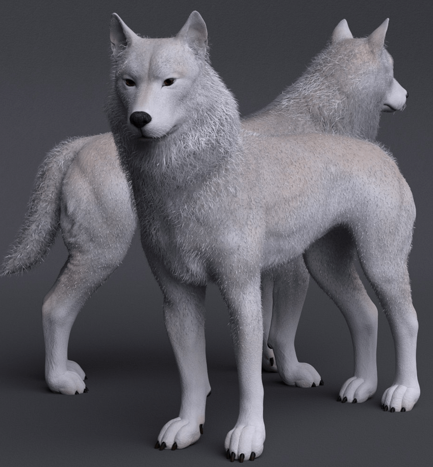 warg 3d wolf model for daz dog