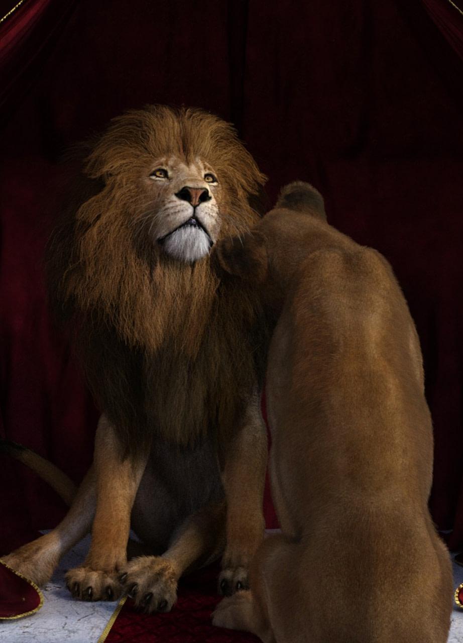 wild poses for felidae lion 3d model